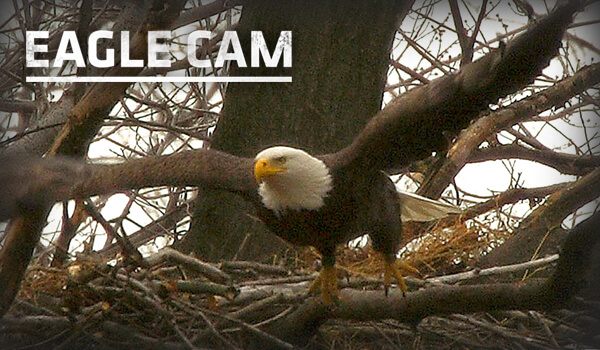 LIVE Northern Michigan Eagle Cam