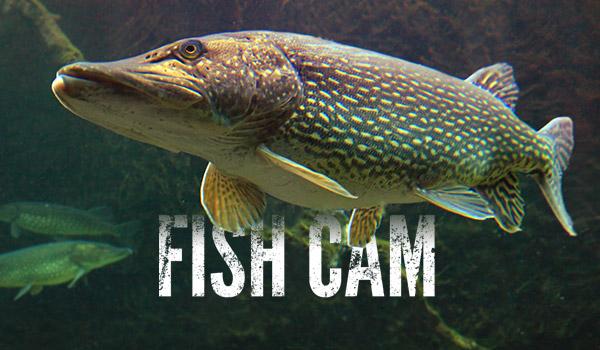 Fish Cam, Mattawan, MI | CarbonTV