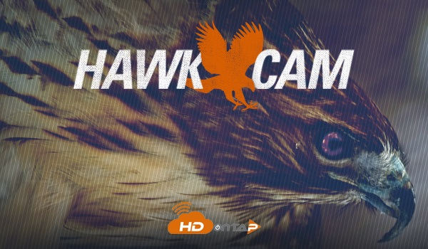 LIVE Red-tailed Hawk Cam