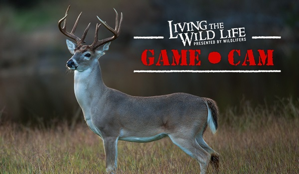 LIVE Wildlifers Living the Wild Life Game Cam