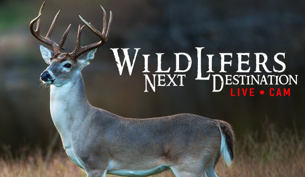 LIVE WildLifers Next Destination Game Cam
