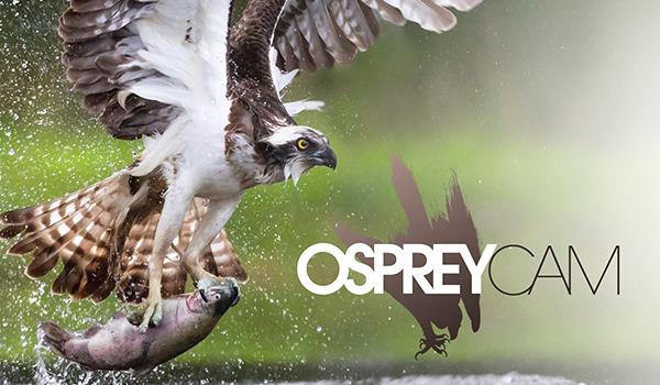 Severna Park Osprey Live Cam