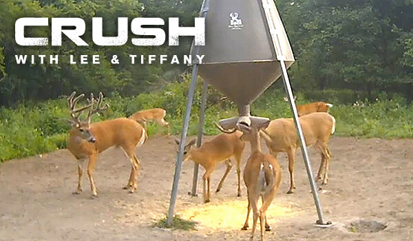 LIVE The Crush with Lee & Tiffany Deer Cam