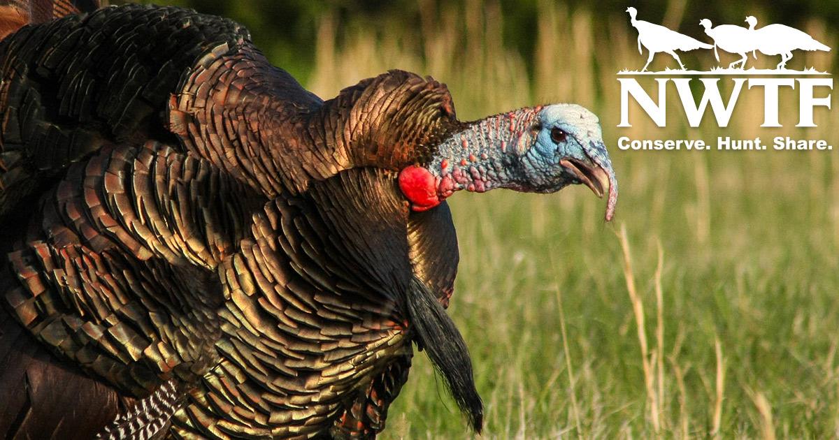 Watch The National Wild Turkey Federation Online   CarbonTV