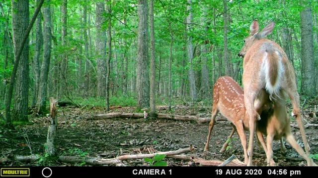 Trail Cam Picture